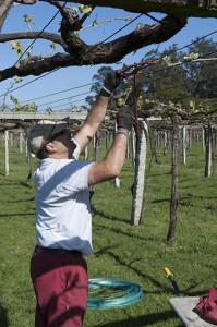 Vineyard repairs